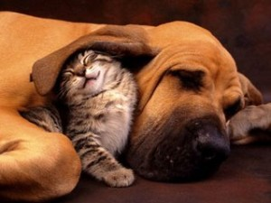 cats-dogs-together-760114